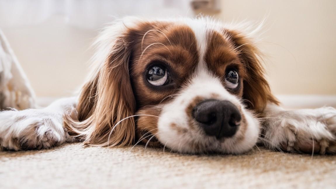 (Italiano) LEGALE – Alla compravendita di animali si applica la disciplina del codice del consumo