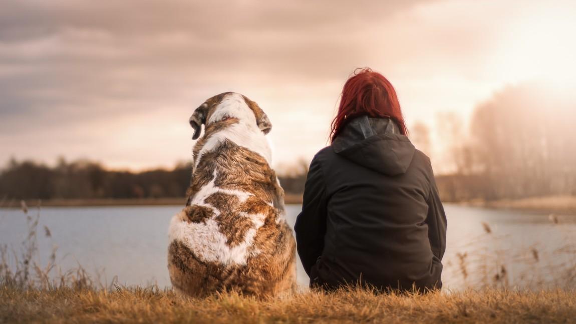 (Italiano) LEGALE – Affido degli animali d'affezione in caso di separazione dei coniugi